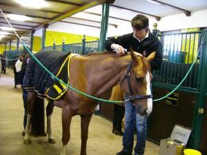 Wer als Minijobber im Pferdestall arbeitet hat natürlich auch Anspruch auf bezahlten Urlaub und Lohnfortzahlung im Krankheitsfall. So wie bei den Vollzeitarbeitsverträgen