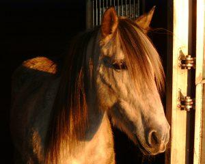 Sich für Pferde zu begeistern ist nicht schwer, im Beruf Pferdewirt zu überleben ist nicht so einfach.